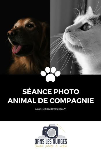 Séance photo animal de compagnie